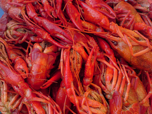 2240682214_0d3e1710ed_crawfish